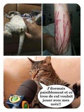 Chats alors !!! - Page 2 Les-noix-5704c32